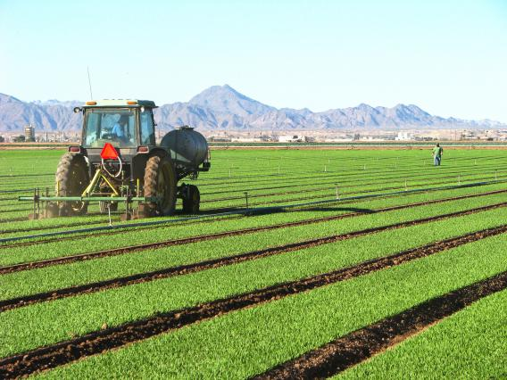 We research soil in arid and semi-arid agriculture